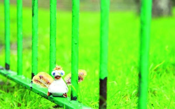 blog birdgate
